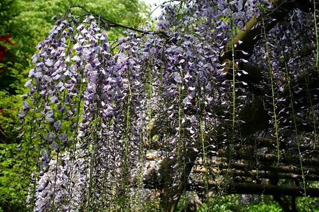 仙郷楼の庭園_春003