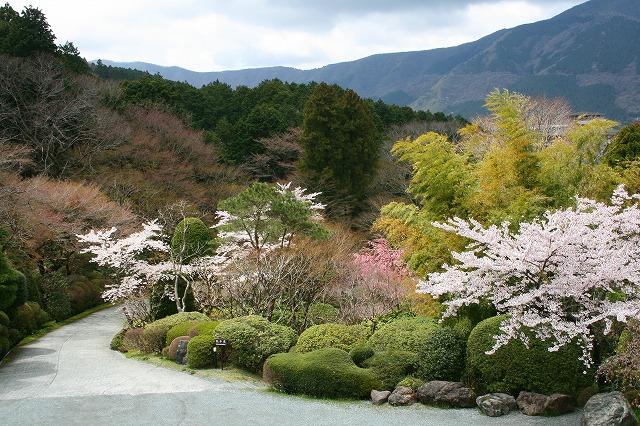 仙郷楼の庭園_春004