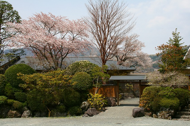 仙郷楼の庭園_春017