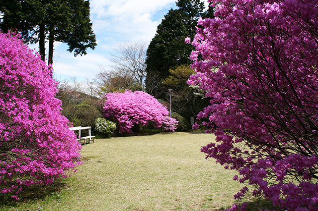 仙郷楼の庭園_春029