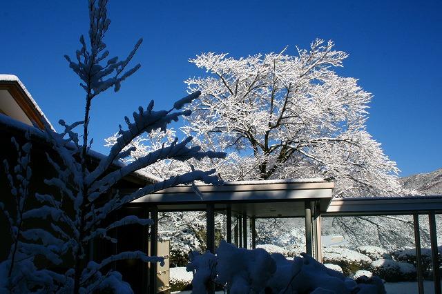 仙郷楼の庭園_冬005
