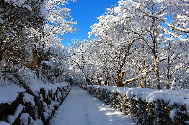 仙郷楼の庭園_冬009